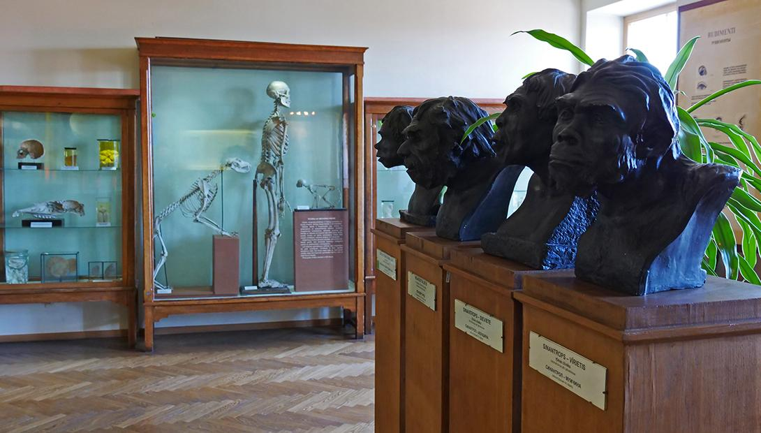 "Exhibition ""Human evolution"""
