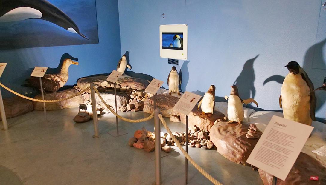 "Exhibition ""Life in the Sea, From North to South"""