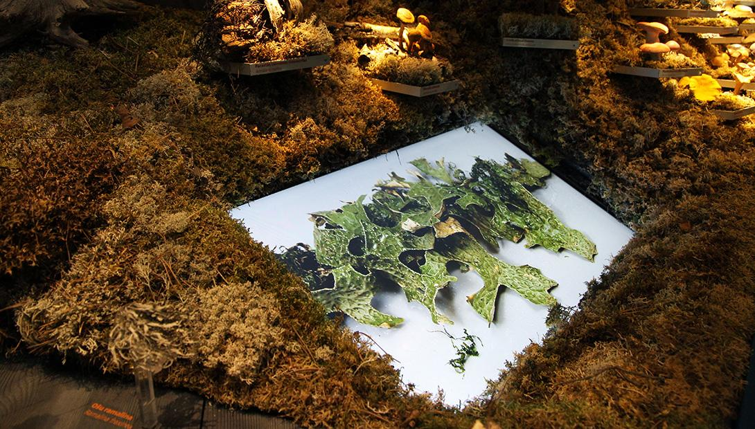 "Exhibition ""Plants and Fungi of Latvia"""
