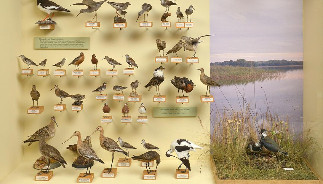 "Exhibition ""Birds of Latvia"""