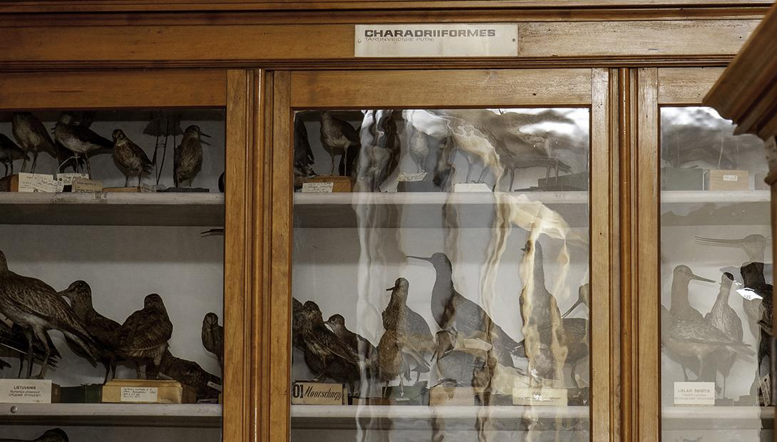 The Latvian Museum of Natural History Zoological collection