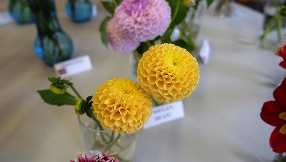 "Exhibition ""Dahlias 2018"""