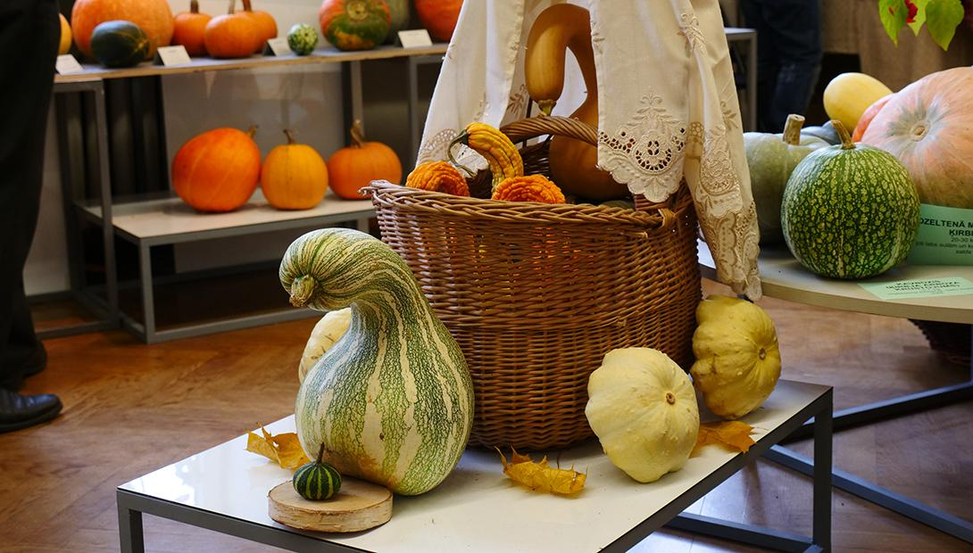 "Exhibition ""Pumpkins and other big berries 2018"""