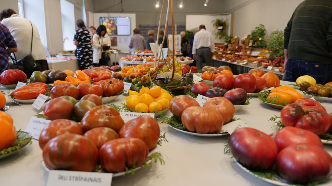 "Exhibition ""Tomatoes 2019"""