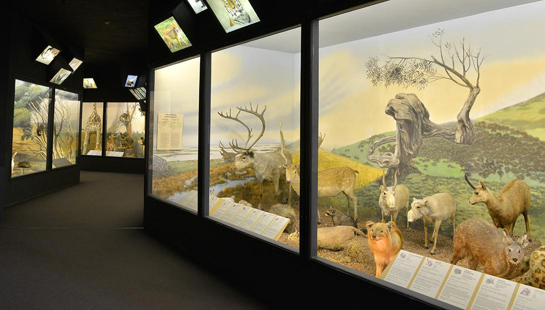 "Exhibition ""Animals of the World"""