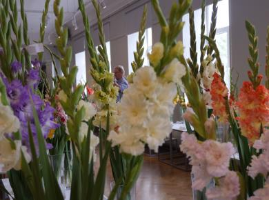 "Exhibition ""Gladiolus 2018"""