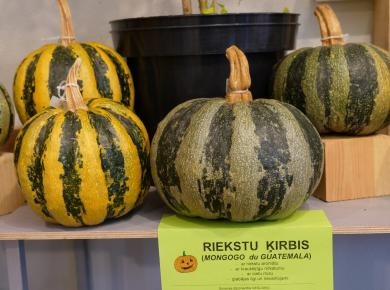 "Exhibition ""Pumpkins and other big berries 2019"""