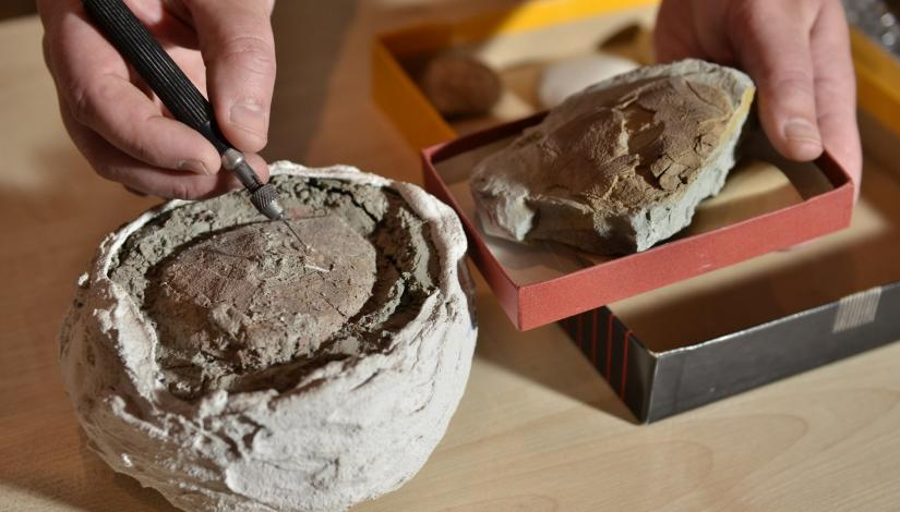 Fossils and paleontological research in Latvia