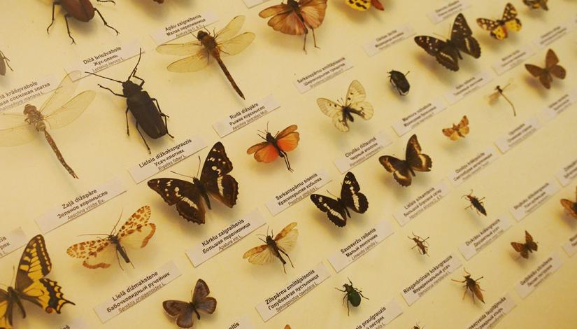 "Exhibition ""Entomology (The World of Insects)"""
