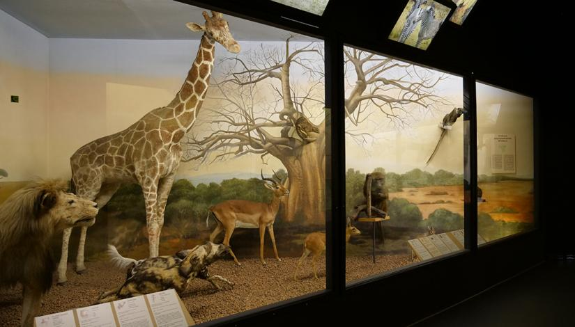 "Exhibition ""Mammals of the World"""