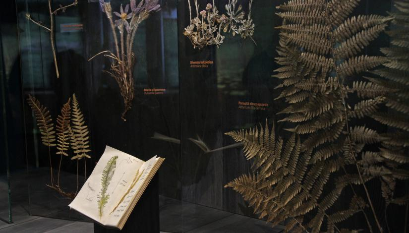 "The exhibition ""Plants and fungi of Latvia"""